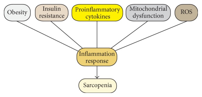 MicroRNA-Regulated Proinflammatory Cytokines in Sarcopenia (Fan et al., 2016)