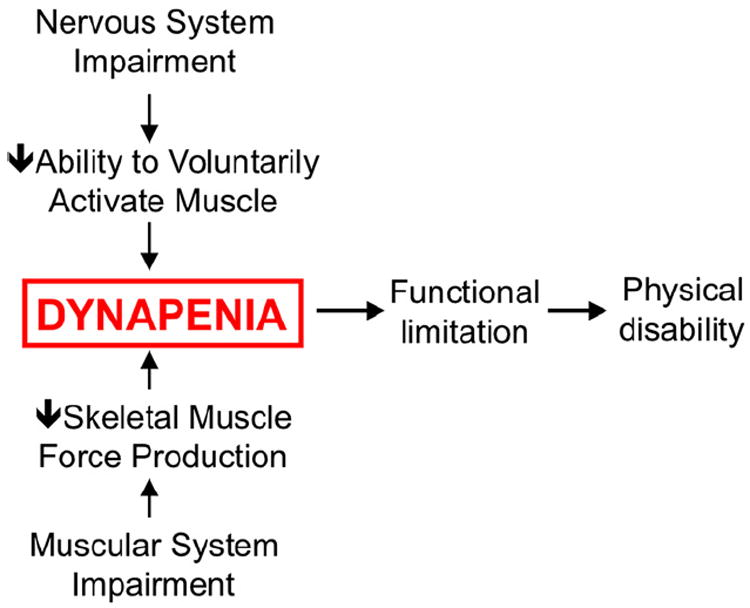 What is dynapenia (Clark and Manini, 2012)